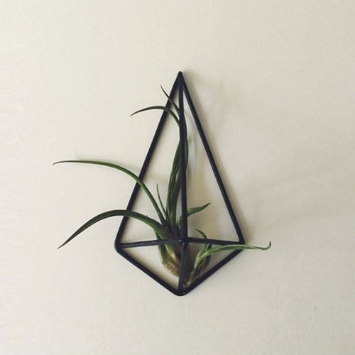 AIR PLANT WALL HANGER